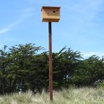 Barn owl box at Pajaro Dunes.
