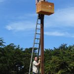 Installing barn owl boxes at Pajaro Dunes.