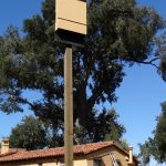 Bat box installed as part of a colony eviction. Santa Lucia Preserve.