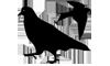 ser_birds