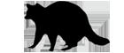 ser_raccoon